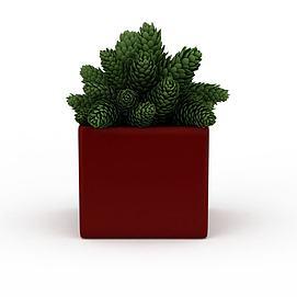 3d绿植盆栽模型