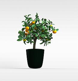 3d果树盆栽模型