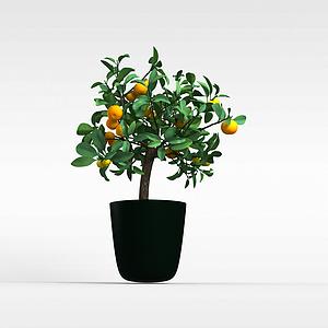 果樹盆栽3d模型