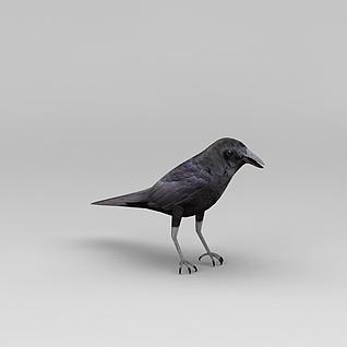 乌鸦3d模型