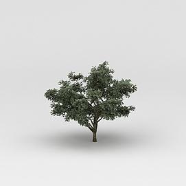 3d<font class='myIsRed'>植物</font>树木模型