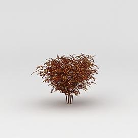 3d<font class='myIsRed'>植物</font>枫树模型