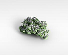 3d花草树木<font class='myIsRed'>植物</font>模型