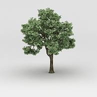 香樟树植物大树3D模型3d模型