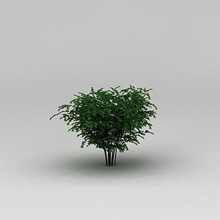 植物树木3d模型