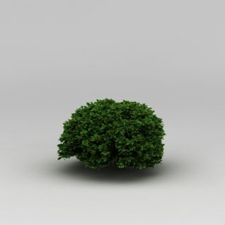 植物绿植3d模型