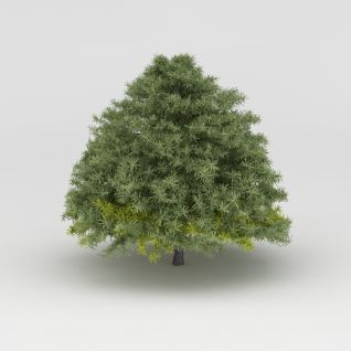 植物大树3d模型