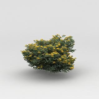 植物花树3d模型