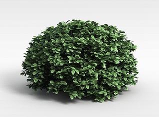 3d植物绿植模型
