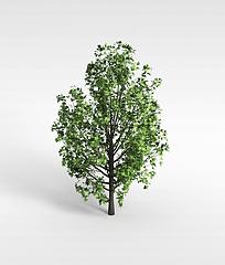 植物大树模型3d模型