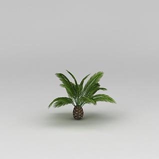 植物菠萝3d模型