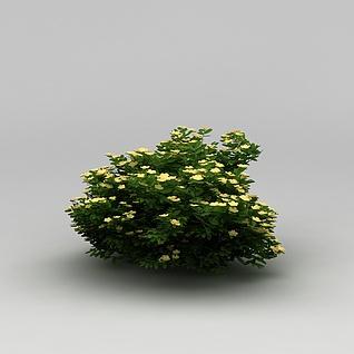 景观植物绿篱3d模型