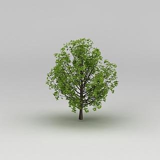 <font class='myIsRed'>植物</font>大树3d模型