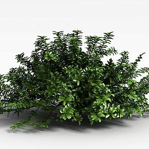 植物綠植模型