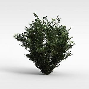 植物大树模型