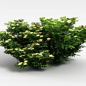 景观植物绿篱模型