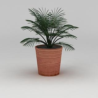 盆栽盆景植物3d模型