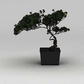 中式盆景盆栽3d模型