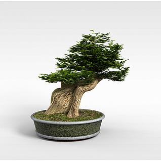 现代树木盆栽3d模型