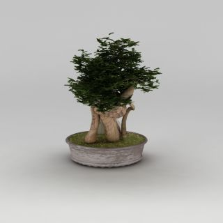 中式盆景<font class='myIsRed'>盆栽</font>3d模型