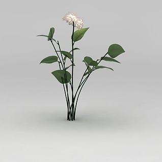 植物花草绿植3d模型