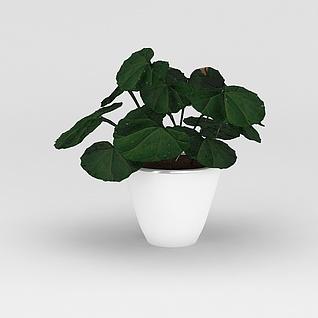 室内绿植花盆摆件3d模型