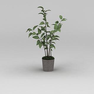 现代小树苗绿植盆栽3d模型