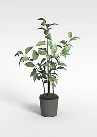 现代小树苗绿植盆栽模型