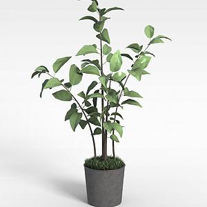 3d现代小树苗绿植盆栽模型