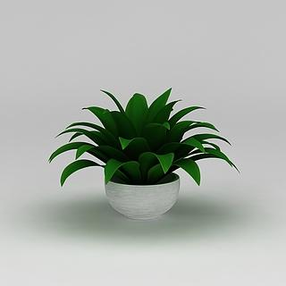 办公室绿植盆栽3d模型