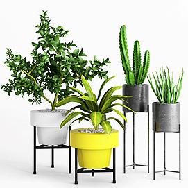 现代室内绿植盆栽模型