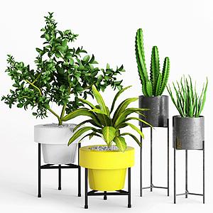 現代室內綠植盆栽模型