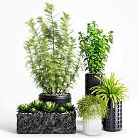 办公室绿植盆栽3D模型3d模型