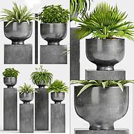 现代庭院绿植盆栽3D模型3d模型