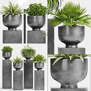 现代庭院绿植盆栽3d模型