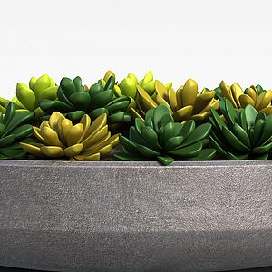 3d办公室多肉植物<font class='myIsRed'>花盆</font>摆件模型