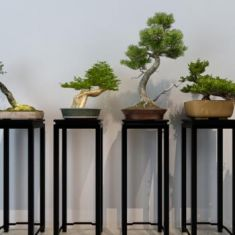 中式树桩盆景盆栽3D模型3d模型