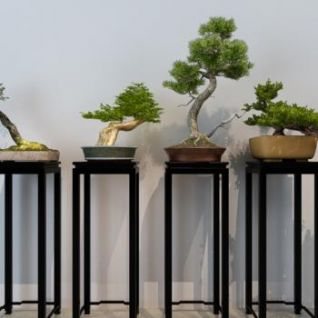 中式树桩盆景盆栽3d模型
