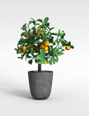 金桔盆栽观赏橘子树模型3d模型