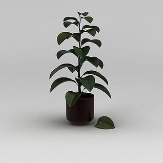灌木绿植盆栽3d模型