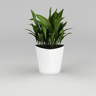 办公室绿植一叶兰3d模型