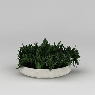 室内绿植盆栽摆件3d模型