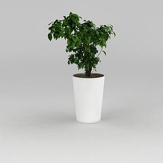 现代办公室绿植盆栽3d模型