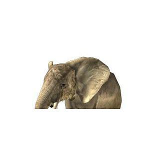 大象3d模型
