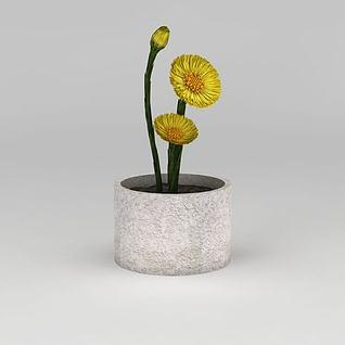 黄色小花盆栽3d模型