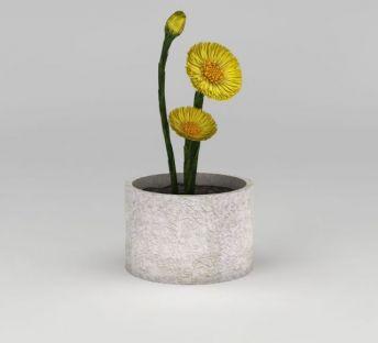 黄色小花盆栽