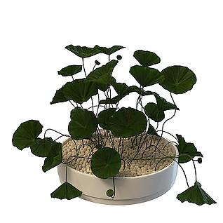 植物摆件3d模型