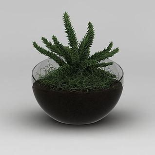 翡翠景天绿植3d模型