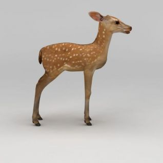 梅花鹿3d模型