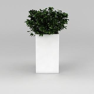 室内<font class='myIsRed'>花盆绿植</font>3d模型